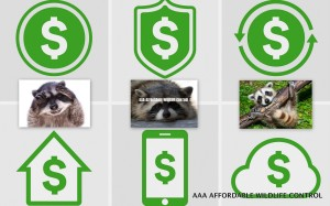how much does raccoon removal cost