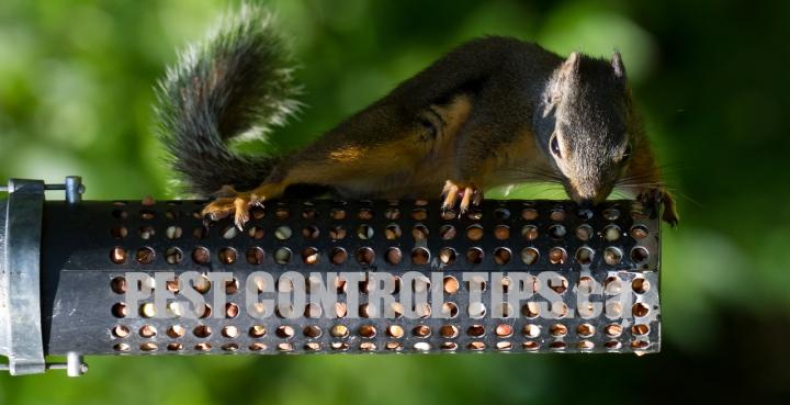 1-squirrel-removal-animal-removal-toronto-001